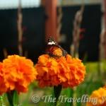 Random Lepidoptera