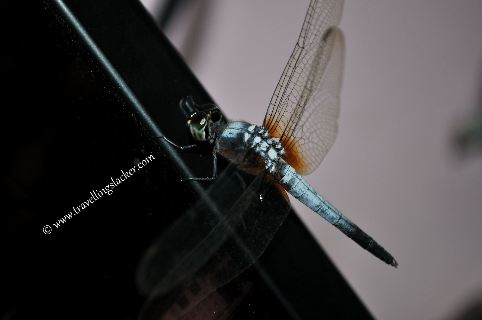 Dragonfly on a computer