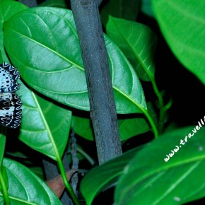 Insects: Power of Unity, Riot of Color and a Predator