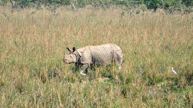 Pobitora: Where Rhinos Dare