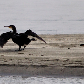 Dibru-Saikhowa National Park: Birds and more Birds
