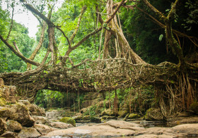 Meghalaya Mini Trip: Living Root Bridge at Riwai Village