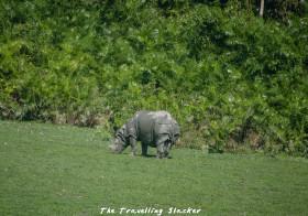 Kaziranga: Misanthropic Rhinos, Invisible Tigers