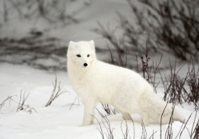 Arctic Photography: Chilling adventure to Hone Your Photography Skills