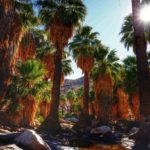 Make The Most Of Your Palm Springs Vacation With These Boutique Stays