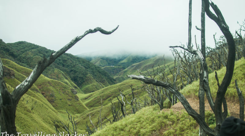 Dzukou Valley Trek: A Lonely Night in the Jungle and Other Struggles