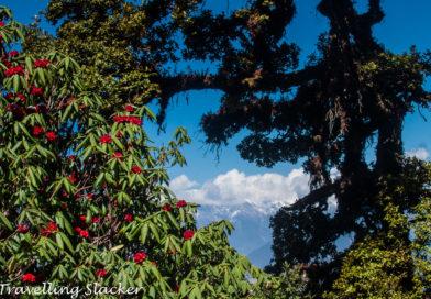 Chopta-Tungnath-Deoria Tal-Kartik Swami-Trekking Guide