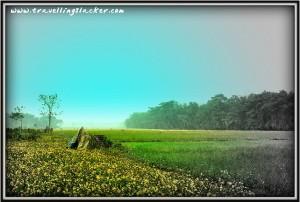 Assam Pastures