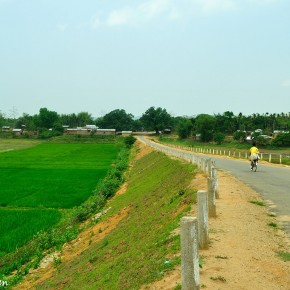 Paddy Fields in Goalpara