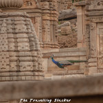 Bateshwar Temple Morena: Resurrection of a Masterpiece