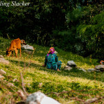 Barot: Simple Joys