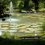 Enjoy the Bounty of Nature at Bogor, Indonesia