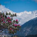 Chopta: Looming Chaukhamba, Snowclad Buransh