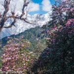 Chopta Travel Guide: Tungnath-Deoria Tal-Kartik Swami-Trekking