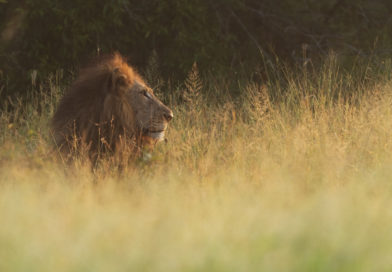 Tackle Kruger National Park Like a Lion: The Ultimate Visitor's Guide