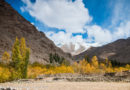 Ladakh Bus Service: All You Need to Know