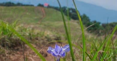 Shirui Kashong Trek: Irises Before the Lilies