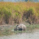 Bagori Range of Kaziranga: A Quick Morning Jeep Safari