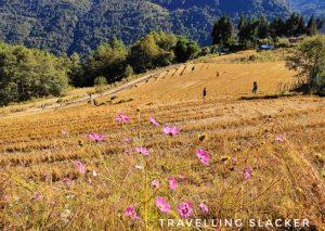 Tawang Rice Terrace