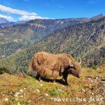 Geshela Peak: A Photogenic Detour from Tawang